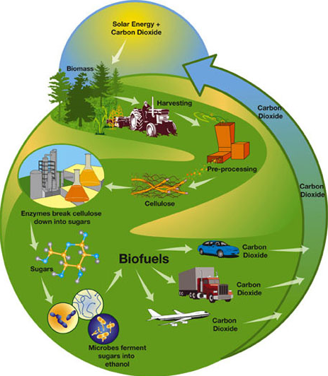 Advantages of biomass how does biomass work Examples of green technology