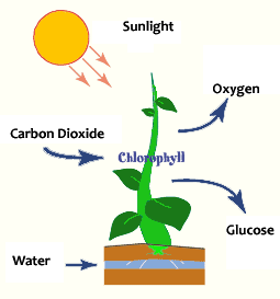How does biomass work to produce energy and make use of it